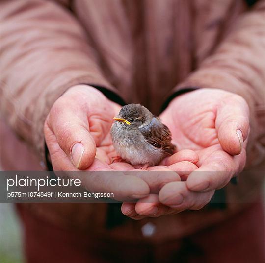 Man holding bird close-up