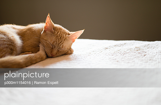 p300m1154016 von Ramon Espelt