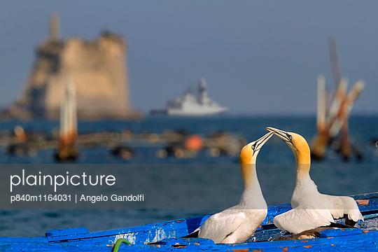p840m1164031 von Angelo Gandolfi