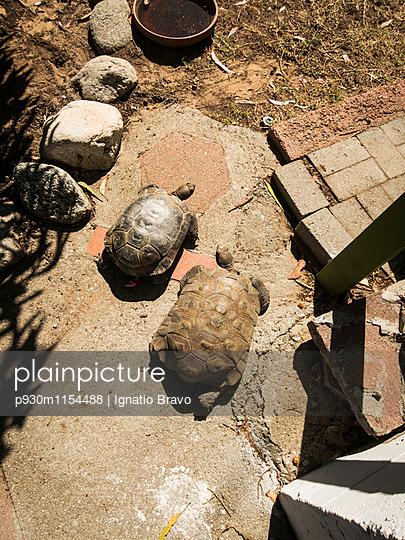 Schildkröten - p930m1154488 von Phillip Gätz