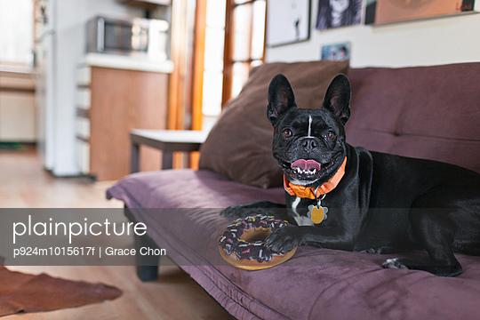 Portrait of dog on sofa holding onto doughnut toy