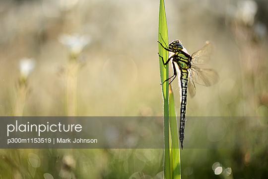 p300m1153519 von Mark Johnson