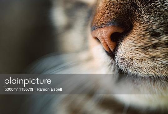 Cat nose, close-up