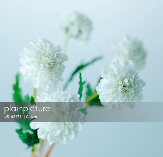 White Flowers
