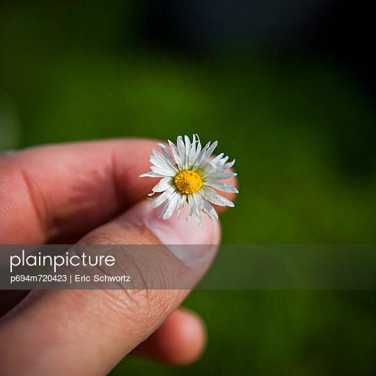 Man\'s Fingers Holding Small White Flower