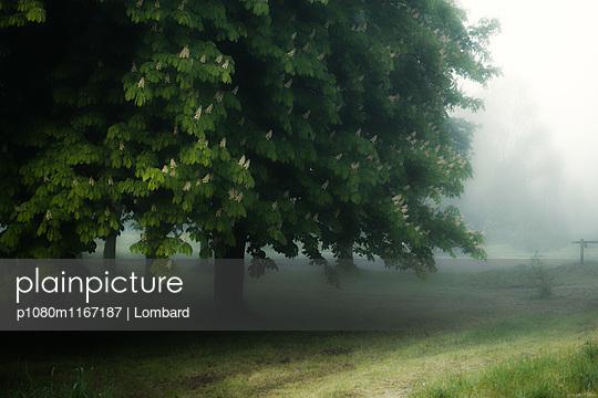 p1080m1167187 von Lombard