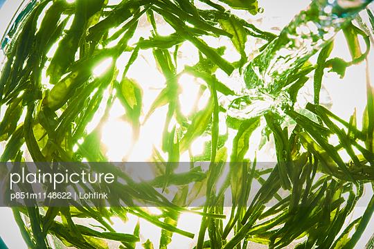 Gras und Wasser im Sonnenschein - p851m1148622 von Lohfink