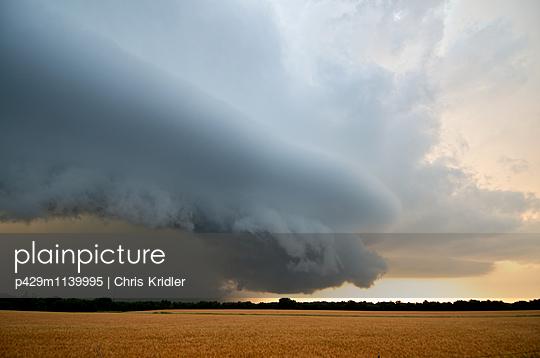 A beautiful storm with a shelf cloud rolls over a golden wheat field in Williamsburg, Kansas, USA