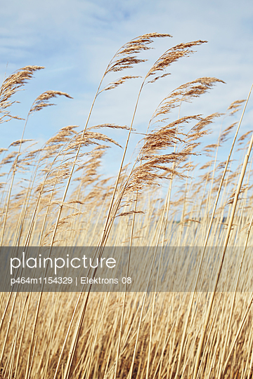 Pampasgras - p464m1154329 von Elektrons 08