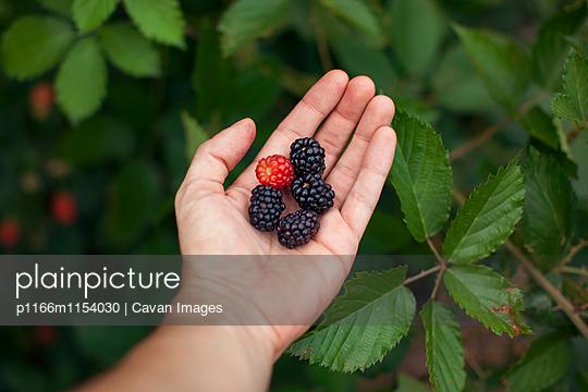 p1166m1154030 von Cavan Images