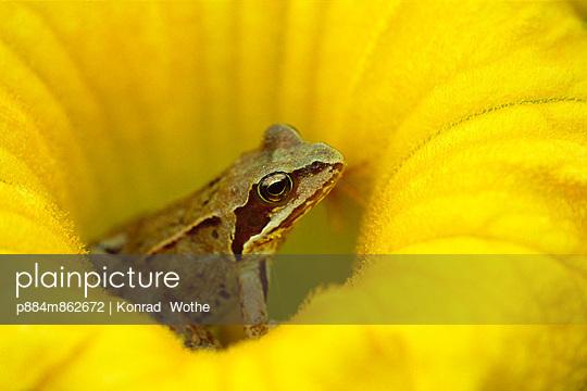Agile Frog in flower