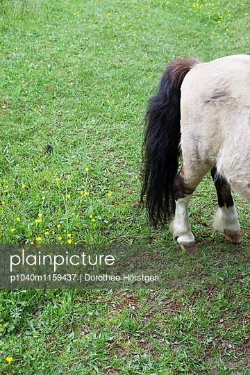Pferdeportrait - p1040m1159437 von Dorothee Hörstgen