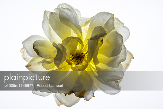 p1309m1146877 von Robert Lambert