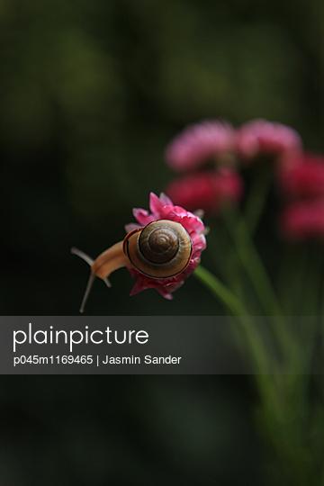 Eine Schnecke erkundet die Welt - p045m1169465 von Jasmin Sander