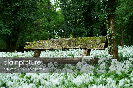 Sitzbank in einer Blumenwiese - p763m1160152 von co-o-peration