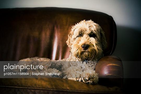 Freundlicher Hund - p1057m1158564 von Stephen Shepherd
