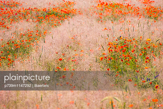 Wilde Blumenwiese - p739m1147292 von Baertels