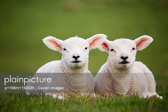 p1166m1150335 von Cavan Images