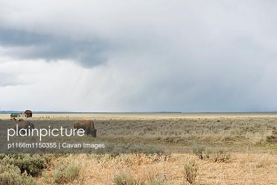 p1166m1150355 von Cavan Images