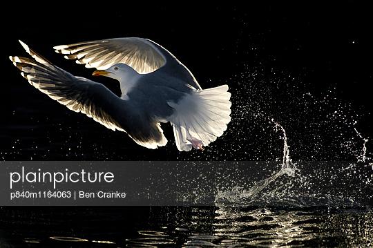 p840m1164063 von Ben  Cranke