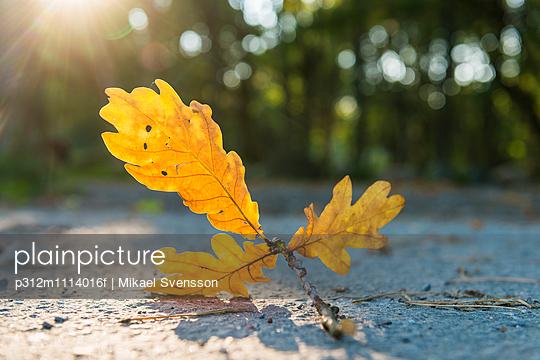 Autumn leaf on sunny day