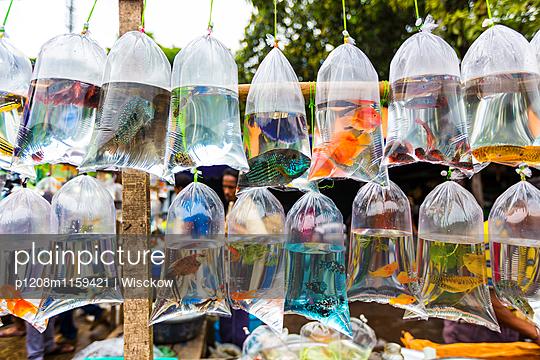 Tiermarkt Kolkata - p1208m1159421 von Wisckow