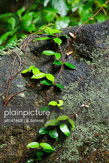 Plant on Rock, Kagoshima Prefecture, Japan