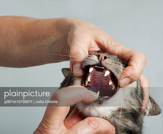Cropped hands of vet opening cat\'s mouth at clinic