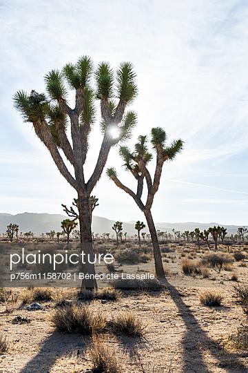 Palm Springs - p756m1158702 von Bénédicte Lassalle