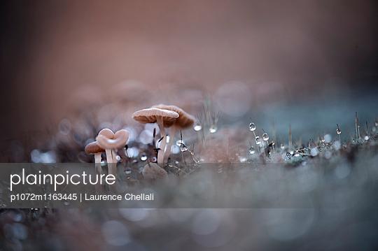 p1072m1163445 von Laurence Chellali