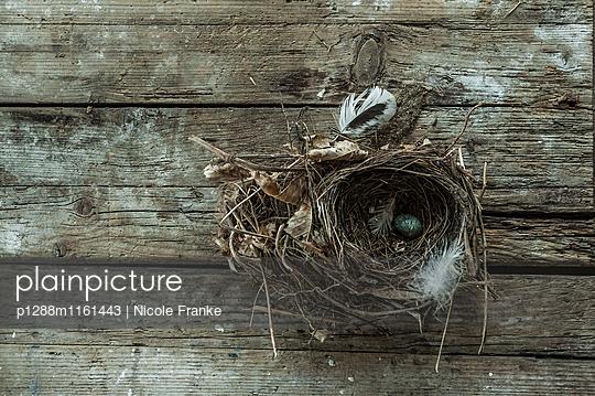 Vogelnest - p1288m1161443 von Nicole Franke