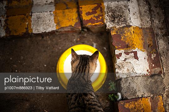Thursty cat
