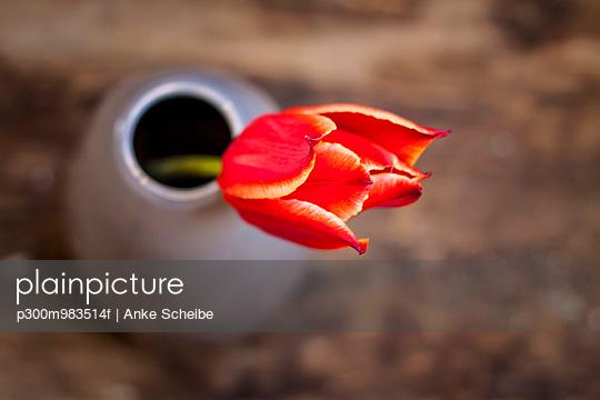 Flower vase with red tulip, Tulipa