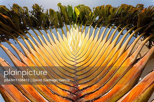 p343m1168412 von David Santiago Garcia