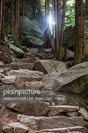 Rock steps on a hiking path in the woods of Squamish, Canada.