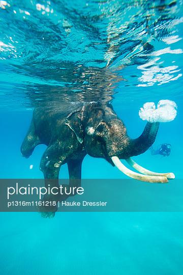 Schwimmender Elefant , Schnorchler und Taucher begleiten ihn, Havelock Island, Andaman Islands, Union Territory, India - p1316m1161218 von Hauke Dressler