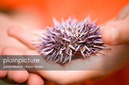 A young girl holds a sea urchin in her hands.