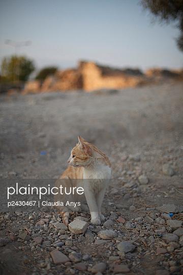 Little cat in Turkey