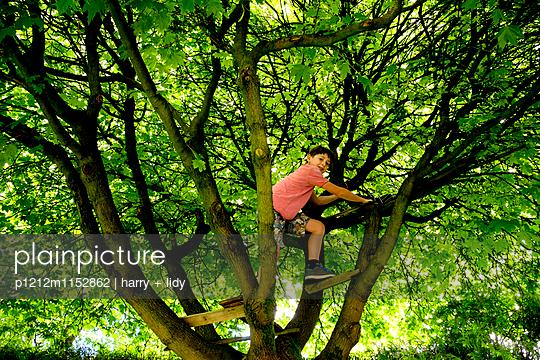 Junge im Baum - p1212m1152862 von harry + lidy