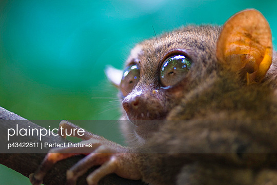Animal, close-up