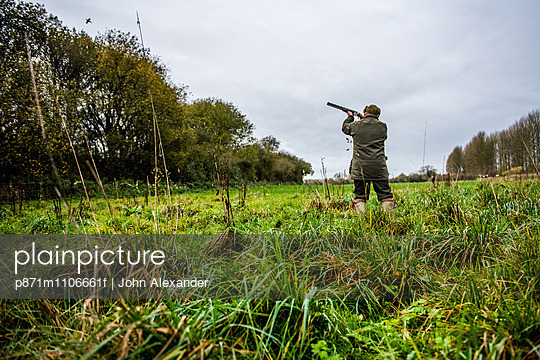 Gun shooting at bird on Driven pheasant shoot, Wiltshire, England, United Kingdom, Europe