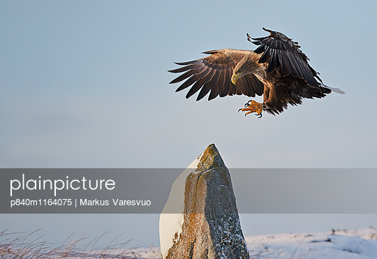 p840m1164075 von Markus Varesvuo
