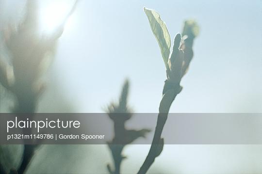 p1321m1149786 von Gordon Spooner