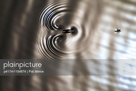 Wasserläufer - p417m1154874 von Pat Meise
