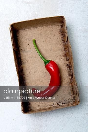 Rote Peperoni in alter Pappschachtel - p451m1165709 von Anja Weber-Decker