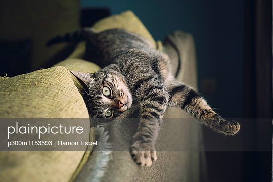 Tabby cat relaxing on a couch