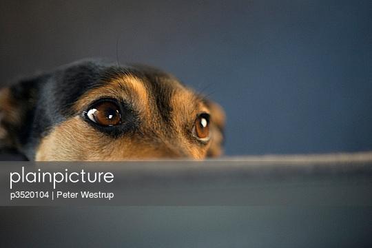Close-up of a dog waiting