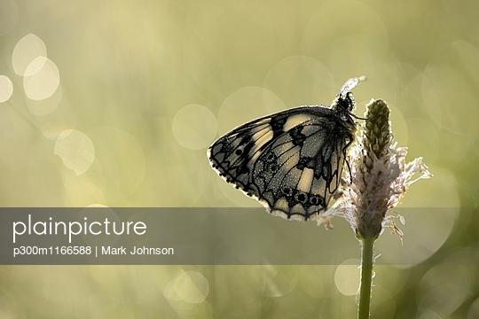p300m1166588 von Mark Johnson