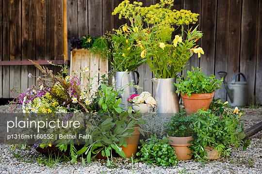 Essbare Wildkräuter, Küchenkräuter und Kräuter in einem Garten, Selbstgezogen - p1316m1160552 von Bethel Fath