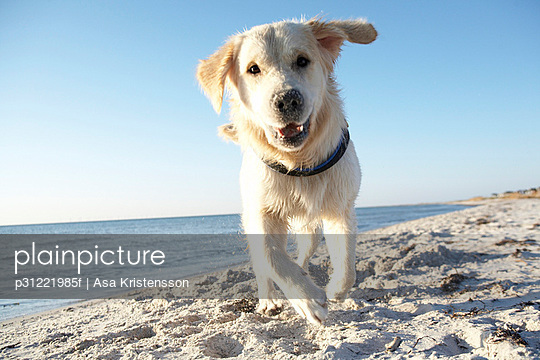 A dog on a beach Sweden.